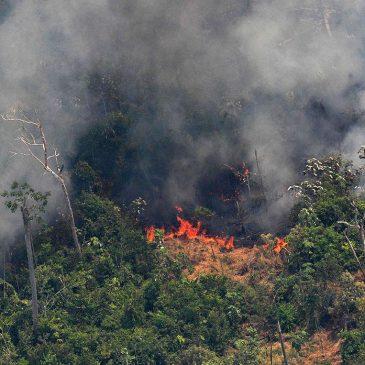 Amazonia víctima del homo economicus