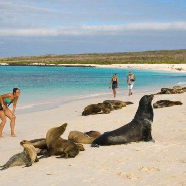 Las Galápagos: archipiélago del Ecuador y excepcional patrimonio natural