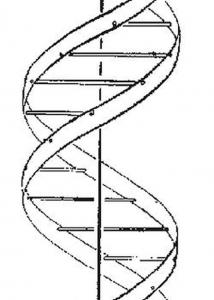 ADN, ARN y las vacunas de ARN mensajero